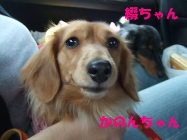 blogyukata07.jpg