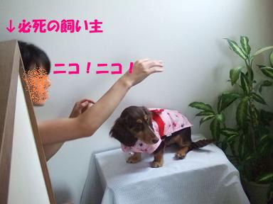 blogyukata25.jpg