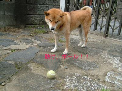 ugokeball1.jpg