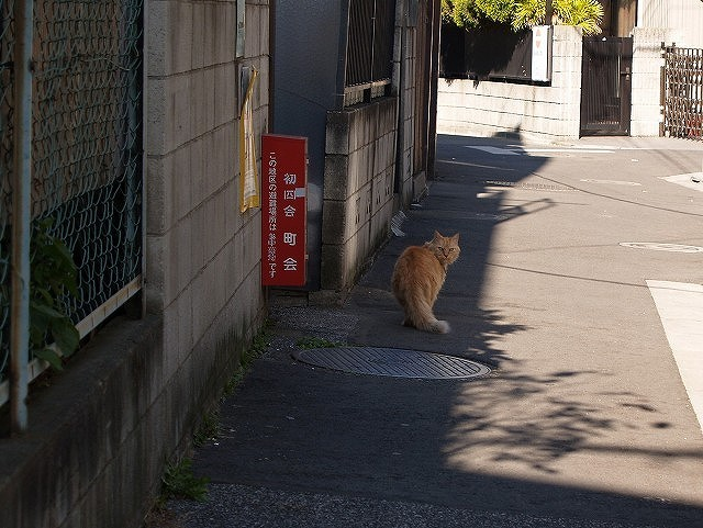 谷中 見返り猫