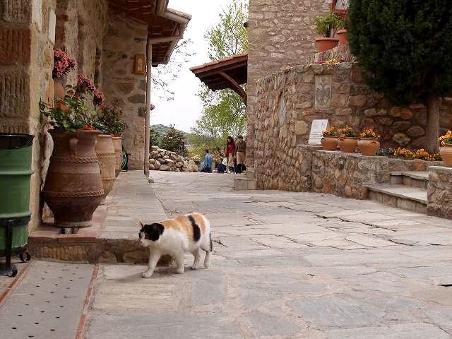 メテオラ修道院の猫
