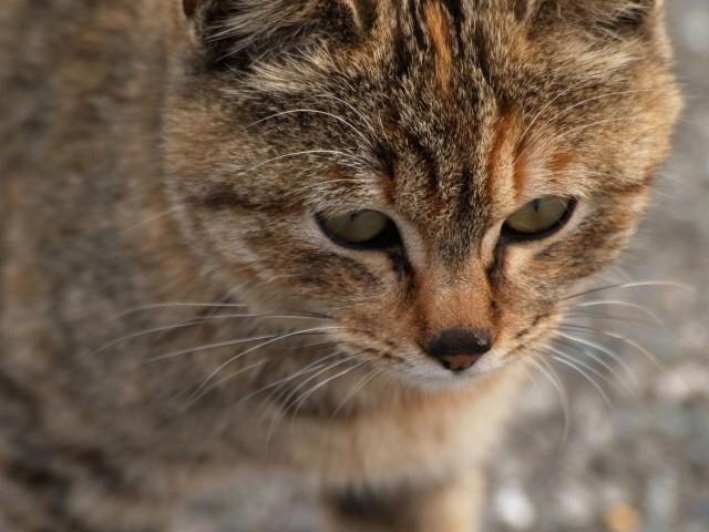 西浦漁港の猫