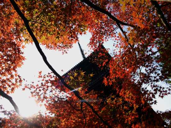 H19.11月 京都2 242