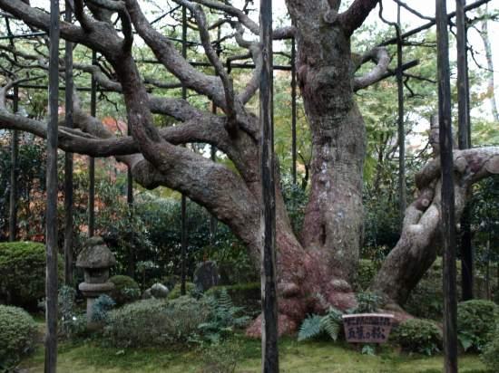 H19.11月 京都2 103