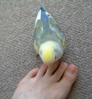 足だ~~~!!
