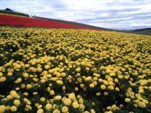 北海道の花々1