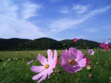 北海道の花々2