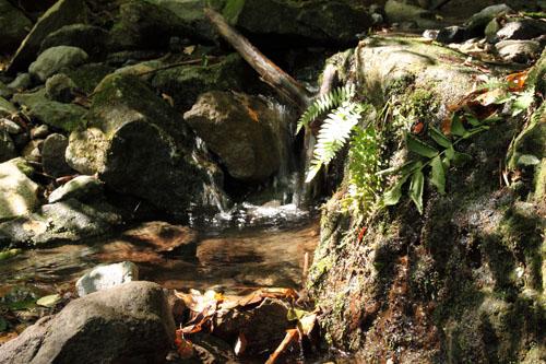 雄飛の滝周辺5