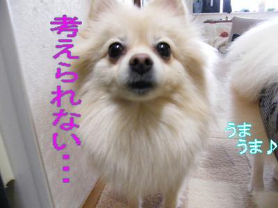 DSCF0111_convert_20100109013247.jpg