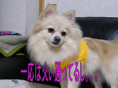 DSCF0153_convert_20100109013512.jpg
