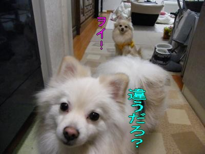 DSCF0159_convert_20100111015817.jpg