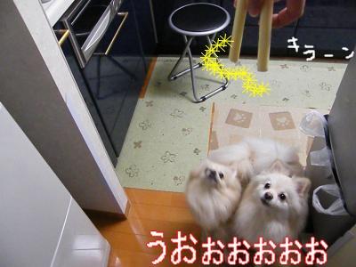 DSCF0164_convert_20100111020208.jpg