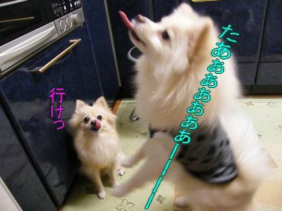 DSCF0170_convert_20100111020404.jpg