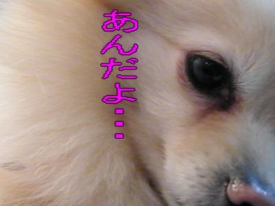 DSCF0224_convert_20100112010158.jpg