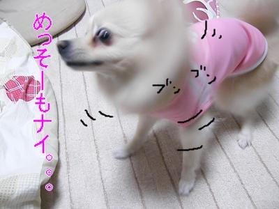 DSCF0234_convert_20100112010335.jpg