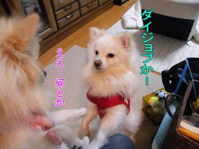 DSCF0284_convert_20100114004001.jpg