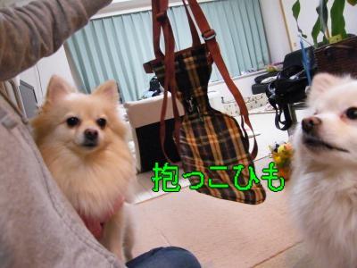 DSCF0299_convert_20100114004035.jpg
