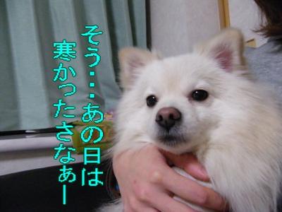DSCF0377_convert_20100117230119.jpg