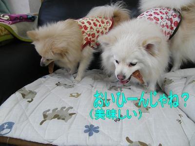 DSCF0447_convert_20100120014700.jpg