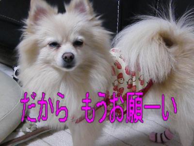 DSCF0539_convert_20100122033623.jpg