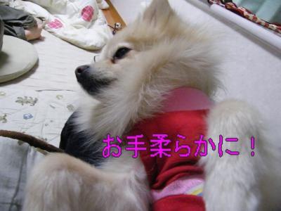 DSCF0578_convert_20100124031654.jpg