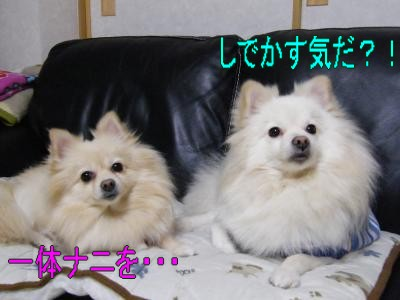 DSCF0587_convert_20100124031408.jpg