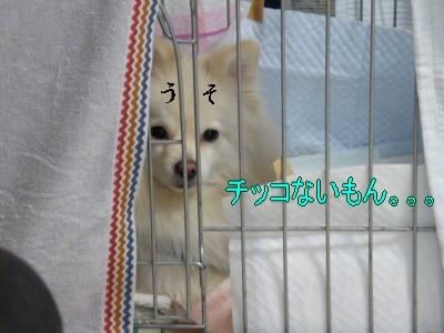 DSCF0594_convert_20100125030535.jpg