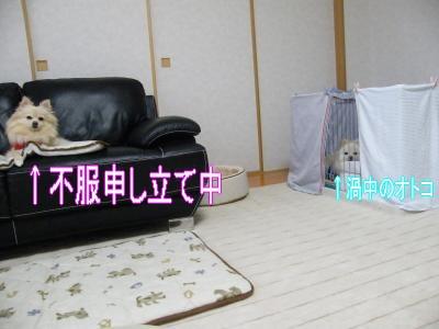 DSCF0595_convert_20100125030606.jpg