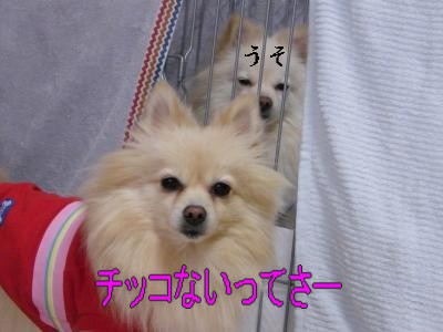 DSCF0606_convert_20100125032113.jpg