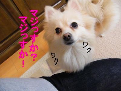 DSCF0634_convert_20100126024437.jpg