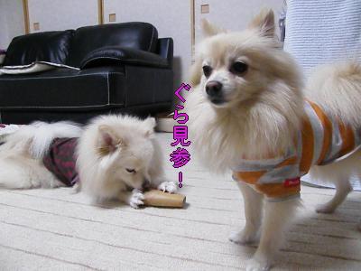 DSCF0655_convert_20100127032104.jpg