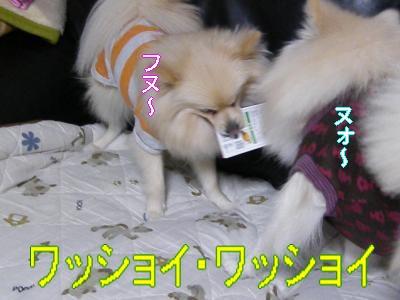 DSCF0683_convert_20100128025204.jpg