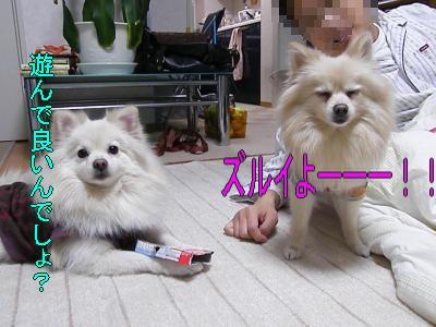 DSCF0703_convert_20100128025409.jpg