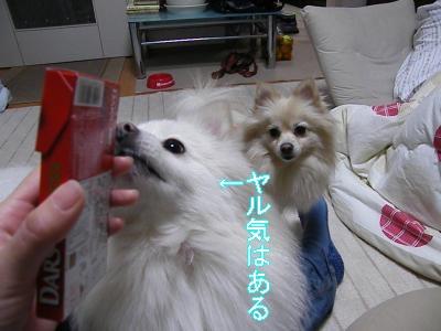 DSCF0705_convert_20100129023103.jpg