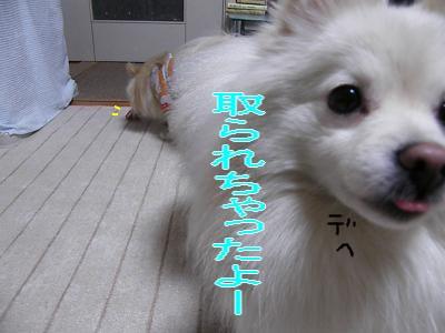 DSCF0707_convert_20100129023136.jpg