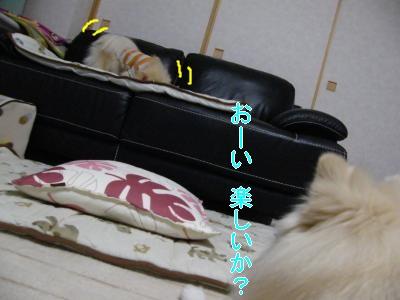 DSCF0712_convert_20100129023209.jpg