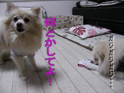 DSCF0733_convert_20100129023446.jpg