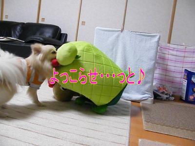 DSCF0738_convert_20100130032406.jpg