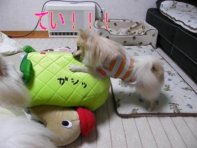 DSCF0742_convert_20100130032439.jpg