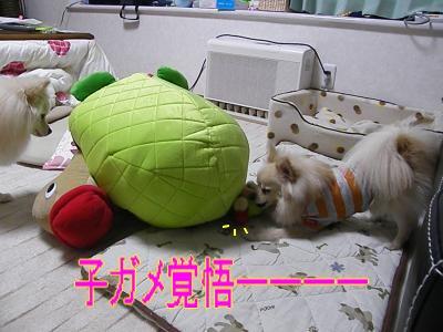 DSCF0747_convert_20100130032505.jpg