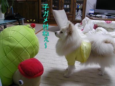 DSCF0754_convert_20100130032540.jpg