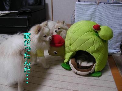 DSCF0758_convert_20100130032629.jpg