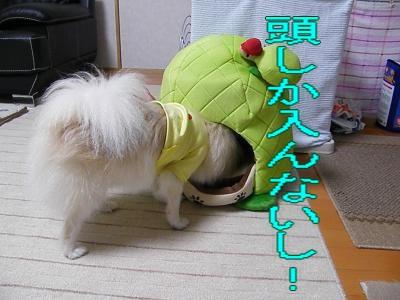 DSCF0759_convert_20100130032702.jpg