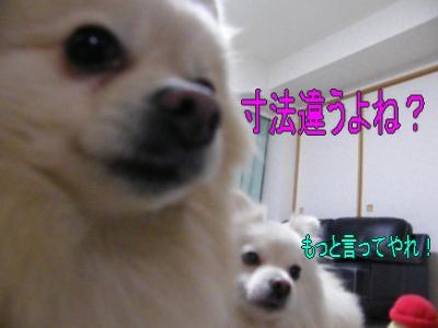 DSCF0764_convert_20100130032724.jpg