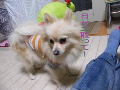 DSCF0779_convert_20100201030322.jpg