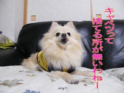 DSCF0818_convert_20100202024018.jpg