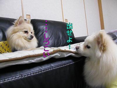 DSCF0824_convert_20100202024109.jpg