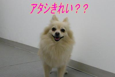 DSCF7632_convert_20090930031929.jpg