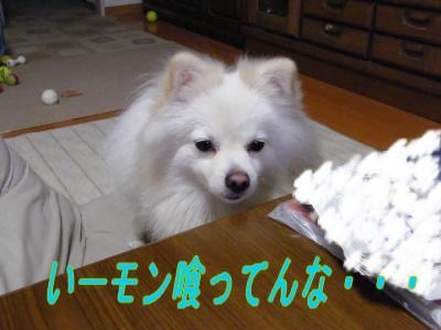 DSCF8862_convert_20091031043325.jpg