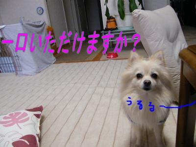 DSCF8870_convert_20091031043537.jpg
